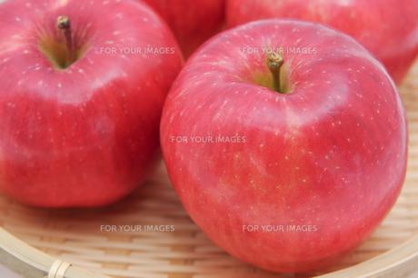 秋の味覚、林檎の写真素材 [FYI00894989]