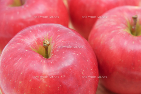 秋の味覚、林檎の写真素材 [FYI00894993]
