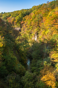 雪割橋から見る紅葉の写真素材 [FYI00895028]