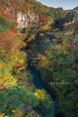 雪割橋から見る紅葉の写真素材 [FYI00895031]