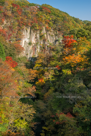 雪割橋から見る紅葉の写真素材 [FYI00895032]