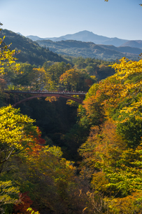 雪割橋と紅葉の写真素材 [FYI00895037]