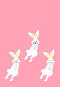 三匹のウサギ ピンク背景の素材 [FYI00895825]