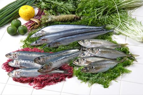 青魚と野菜の素材 [FYI00896536]