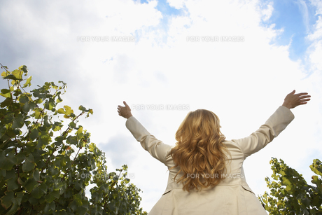 Woman raising arms in vineyardの素材 [FYI00900414]