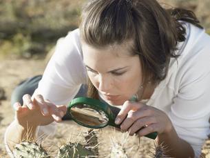Woman examining cactusの素材 [FYI00900919]