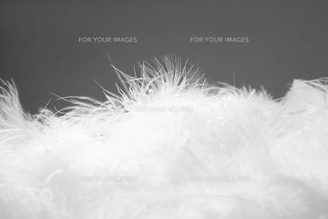White feathersの素材 [FYI00901579]