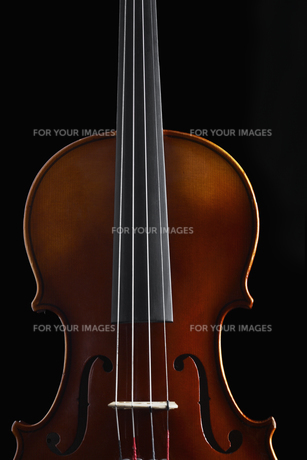 Close-up of violinの素材 [FYI00903324]