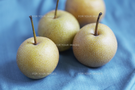 Small applesの素材 [FYI00904315]