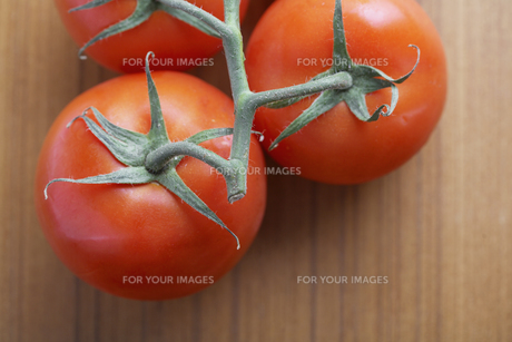 Close-up of tomatoes on vineの素材 [FYI00904334]