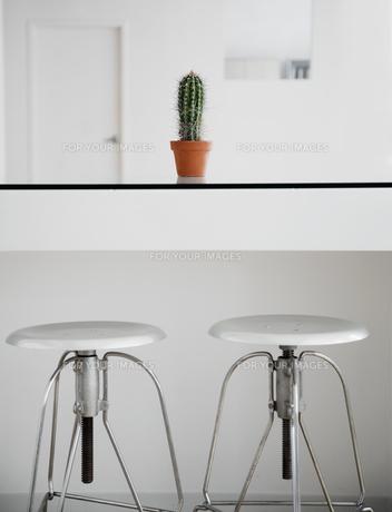 Cactus Near Two Stoolsの素材 [FYI00905088]