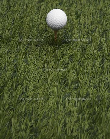 Golf Ball on Grassの素材 [FYI00905299]