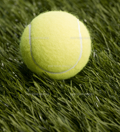 Single Tennis Ballの素材 [FYI00905334]