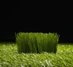 Grassの素材 [FYI00905524]