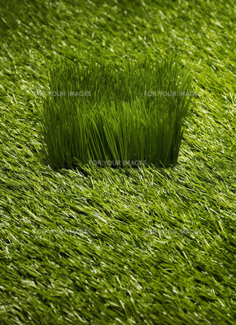 Grassの素材 [FYI00905527]