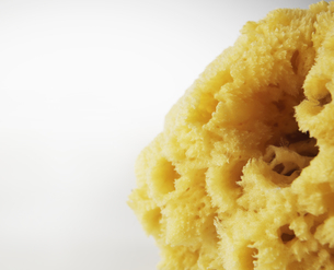 Close-Up of Natural Spongeの素材 [FYI00907160]