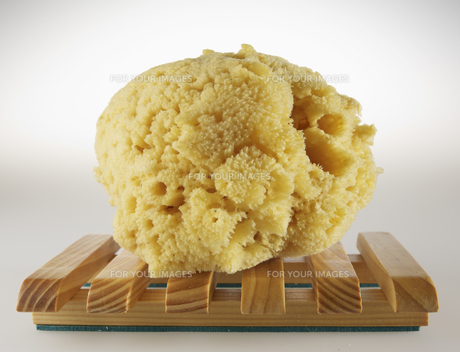 Natural Sponge on Wooden Trayの素材 [FYI00907195]