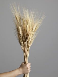 Woman Holding Bunch of Wheat Plantsの素材 [FYI00907261]