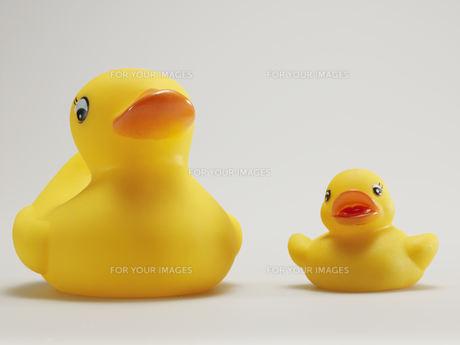 Two Rubber Ducks Side by Sideの素材 [FYI00907398]