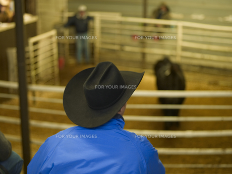 Man with Cowboy Hat Watching Calf Inside Fenceの素材 [FYI00907456]