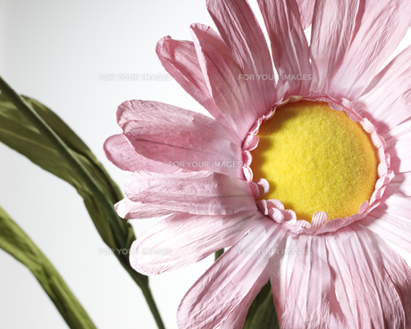 Pink Flowerの素材 [FYI00907583]