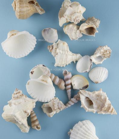 Seashellsの素材 [FYI00907639]