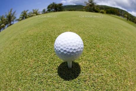 ティーに乗ったゴルフボールの素材 [FYI00911383]