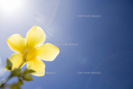トロピカルな花の素材 [FYI00912427]