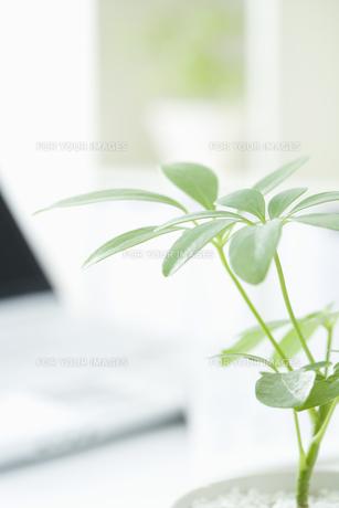観葉植物とコンピュータの素材 [FYI00913619]