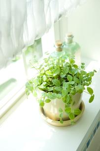 窓際に置いた鉢植えの素材 [FYI00914677]