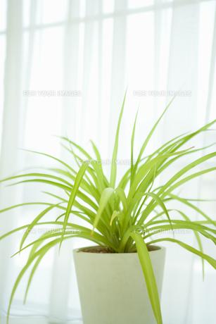 窓際の植物の素材 [FYI00914809]