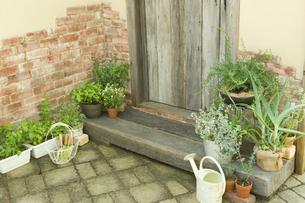 玄関脇で育てているローズマリーやアロエやミントの素材 [FYI00914835]