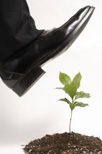 植物を踏みそうになるビジネスマンの足の素材 [FYI00916667]