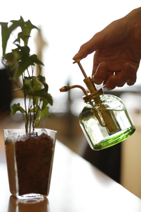 植物に水をやる女性の手元の素材 [FYI00916691]