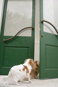 ドアの向こうを覗く犬の素材 [FYI00917629]