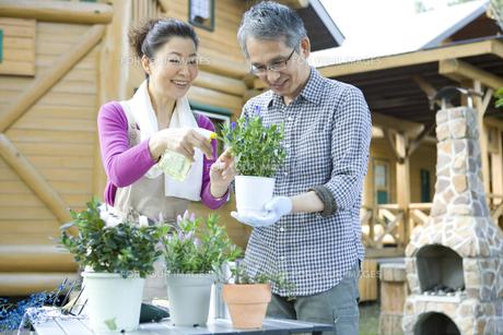 植物の手入れをするシニア夫婦の素材 [FYI00919421]