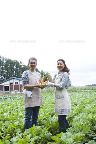 畑で野菜を持ったシニア夫婦の素材 [FYI00919426]