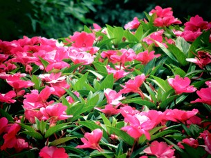 9月の花と植物の写真素材 [FYI00921110]