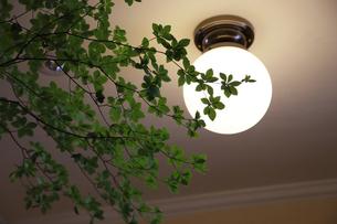 部屋の天井の灯りと植物の葉の写真素材 [FYI00921123]