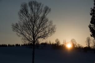 夕日が沈む丘と冬木立の写真素材 [FYI00921431]
