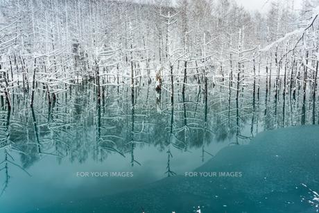冬の湖 美瑛町の写真素材 [FYI00921442]