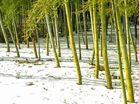 竹林 雪の晴れ間の写真素材 [FYI00921580]