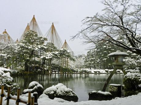 雪の兼六園 雪吊りの写真素材 [FYI00921587]