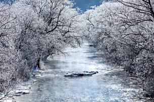 樹氷の川の写真素材 [FYI00921597]