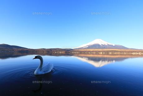 富士山の写真素材 [FYI00921617]