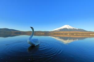 富士山の写真素材 [FYI00921623]