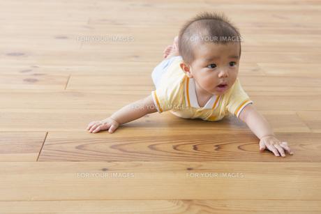 ハイハイする赤ちゃんの素材 [FYI00922294]