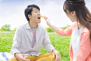 ピクニックをする家族の写真素材 [FYI00922684]