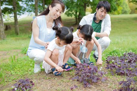 植物に水をやる家族の素材 [FYI00922828]