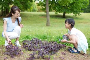 植物に水をやる家族の素材 [FYI00922831]